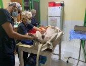 كيف تحارب مديرية الطب البيطرى بالبحر الأحمر الكلاب الضالة؟