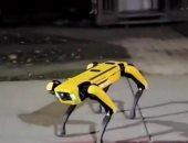 كلب روبوت يتفقد موقع حادث تشيرنوبيل