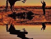 """""""إيديه تتلف فى حرير"""".. فنان تشكيلى بكفر الشيخ يصمم مجسمات لحصان وجمل وأسماك مستخدماً خامات بيئية.. """"محمد النحاس"""": تأثرت بجمال البرلس وشاطئ المتوسط فنميت موهبتى بتصميم الأشكال المتعددة.. صور"""