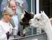 الأميرة صوفى تطعم حيوانات نادرة بحديقة فوكسهول سيتى فارم بريطانيا