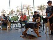 مراجيح وقهوة وشاى.. افتتاح أول مقهى لعشاق الكلاب بالسعودية