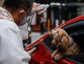"""""""مباركة"""" الحيوانات الأليفة فى الفلبين عن بعد .. اليوم العالمى للحيوان.. ألبوم صور"""