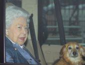 أبرزهم الملكة إليزابيث.. أفراد العائلة المالكة فى بريطانيا يعشقون الكلاب.. صور