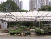 مركز تجارى يحول سطح المبنى لبساتين زراعة باذنجان وموز فى سنغافورة.. فيديو
