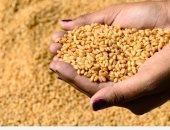 الزراعة تفند شائعة إيقاف الإجراءات الرقابية على شحنات القمح المستوردة