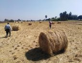"""""""زراعة القليوبية"""" تشكل لجانا للمرور على مواقع تجميع قش الأرز لمنع حرقه.. صور"""