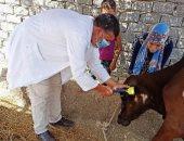 تحصين 79 ألف رأس ماشية بالشرقية ضد الحمى القلاعية والوادى المتصدع