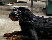 الجيش الأمريكى يدعم كلابه بنظارات ذكية لمساعدتهم على اكتشاف المتفجرات