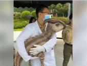 اعرف حقيقة ظهور حيوان غريب في إحدى المعارض بالصين .. فيديو