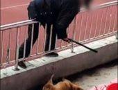 عاملان يعذبان كلبا حتى الموت فى جامعة صينية.. اعرف القصة