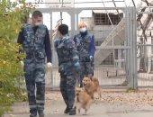تدريب كلاب هجينة فى روسيا على رصد المصابين بكورونا بالمطارات.. فيديو