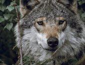 أنصار حماية البيئة يقاضون خدمات الحياة البرية الأمريكية لقتل 1.2 مليون حيوان