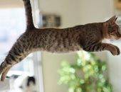 القط الطائر.. مغامرات وبهلوانات عالم القطط.. ألبوم صور
