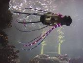 مهندسون يطورون روبوتًا يشبه الحبار لالتقاط صور للأسماك والمرجان