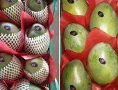 """""""الزراعة"""" تؤكد تخطى صادرات المانجو والجوافة والعنب 176 ألفا و551 طنا"""