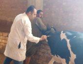 لجنة لتحصين الماشية ضد الحمى القلاعية والوادى المتصدع بالفيوم