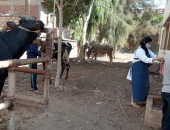 جامعة الزقازيق توجه قافلة طبية بيطرية لقرية أبو لطفى بالشرقية