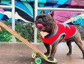 كلب مشهور عضو فى فرقة موسيقية ويمارس رياضة التزلج.. اعرف قصته