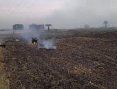 45 محضرا وغرامة فورية لحرق المخلفات الزراعية فى أسيوط .. صور