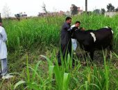 الزراعة تعلن تحصين 3 ملايين و190 ألف رأس ماشية ضد 5 أمراض وبائية خلال 30 يوما
