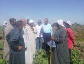 مديرية الزراعة بالشرقية تنفذ مدرسة حقلية عن محصول البنجر