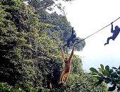 الرقص على الحبال.. محاولة انقاذ قرود نادرة فى غابات الصين ..ألبوم صور