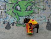 كلب فرنسى ينافس البشر فى التزلج ويستعرض مهاراته فى حديقة بموسكو ..ألبوم صور
