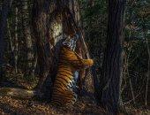 سحر الطبيعة.. أجمل صور للحياة البرية لعام 2020.. ألبوم صور