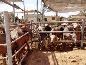 بيطري الشرقية : تأمين 14 ألف و482 رأس ماشية للحفاظ على الثروة الحيوانية