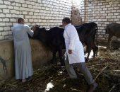 الزراعة تجرى مسحا فى 3433 قرية لرصد الأمراض الوبائية للماشية.. صور