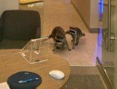 حيوانات الراكون تدخل مبنى بنك فى ولاية كاليفورنيا الأمريكية.. صور