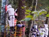 """تطهير شجرة من """"الدبابير القاتلة"""" فى واشنطن باستخدام مكنسة كهربائية.. صور"""