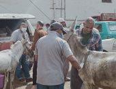 علاج وتحصين 960 رأس ماشية وخيول فى قافلة بيطرية بقرية المنيل بالدقهلية
