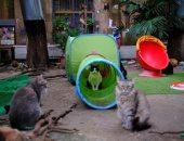 """""""لعب وأكل وحب"""".. محمية لرعاية وتبنى القطط ببرشلونة.. ألبوم صور"""