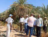 وفد من معهد بحوث الصحراء والفاو يتابع المشروعات الزراعية بالوادى الجديد