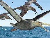 اكتشاف حفريات طائر عملاق فى أنتاركتيكا.. اعرف التفاصيل