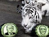 من الفائز.. الحيوانات تتنبأ بنتائج انتخابات الرئاسة الأمريكية