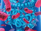 بكتيريا البروبيوتيك مفيدة لصحة جهازك الهضمى.. اعرف السبب