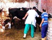 """""""الزراعة """" تحاصر مرض الحمى القلاعية بـ 10 خطوات لحماية الثروة الحيوانية"""