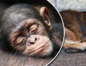 كم ساعة تنامها الحيوانات؟.. الخفاش أكثر الحيوانات نوما بـ20 ساعة يوميا وأقلها الفيل والزرافة بـ120 دقيقة فقط.. أستاذ بالطب البيطرى: الحصان لديه القدرة على النوم واقفا.. والدببة تنام طوال فترة البيات الشتوى