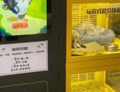 معندهمش رحمة.. إجبار قطط وكلاب صغيرة على العيش فى آلة ألعاب بالصين.. فيديو