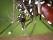 ارتفاع عدد المصابين بفيروس غرب النيل فى هولندا بعد اكتشاف 5 حالات جديدة