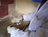 محافظ كفر الشيخ : تحصين 35 ألف و 300 طائر من الأمراض الوبائية