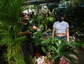 ارتفاع جنونى لأسعار النباتات فى الفلبين بسبب إغلاق كورونا.. فيديو وصور