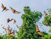 """أستاذ بحوث زراعية: الإجراءات الاحترازية لمواجهة خفاش """"نيباه"""" بسيطة"""