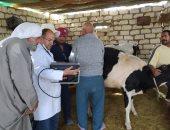 الزراعة تطلق قوافل بيطرية مجانية لفحص الماشية بواحة سيوة.. صور