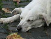 أوفى المخلوقات.. كلب ينتظر مالكه المتوفى منذ 11 عاما.. اعرف حكايته