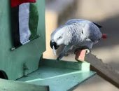 الحاجة أم الاختراع.. ابتكار مدهش يحول الطيور إلى عمال نظافة.. فيديو وصور