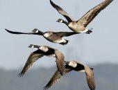 تغير المناخ يتسبب فى تدهور صحة الحيوانات والطيور المهاجرة