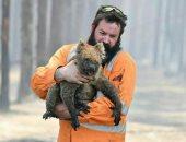 الرحمة حلوة.. إنقاذ الحيوانات المصابة في حرائق غابات أستراليا.. ألبوم صور